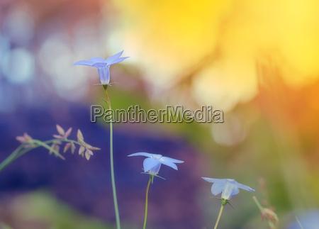 niebieski drzewa rozkwitac kwitnienie kwiaty bluetenpracht