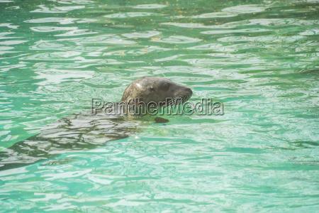chronic chronionej zwierze ssak plaza brzegach