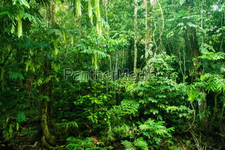 niesamowity tropikalny gesty las