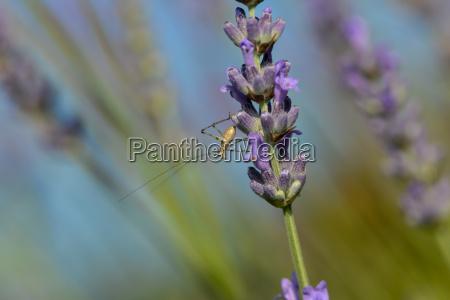 owad drzewa rozkwitac kwitnienie kwiaty bluetenpracht