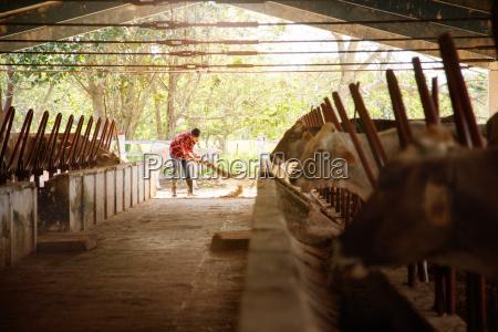 czlowiek sprzatanie farm farmer sweeping stajnie