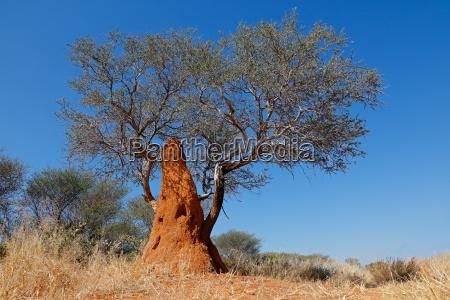 drzewo i kopiec