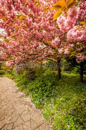 piekny mily drzewo park ogrod ogrodek