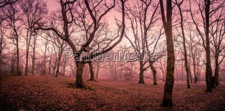 przyroda srodowisko drzewo drzewa park drewno