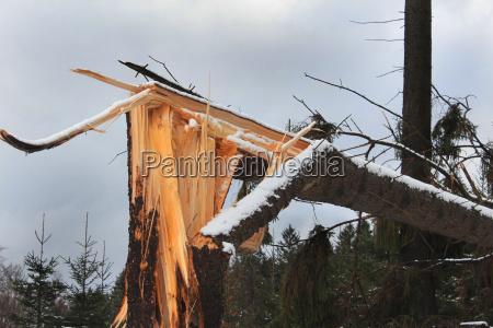 symuluja drzew uszkodzenia wiatr na swierku
