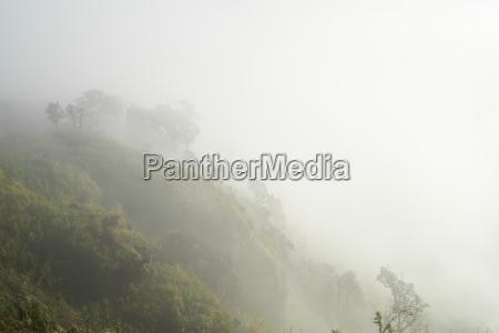 jazda podrozowanie drzewo azja mgla opary