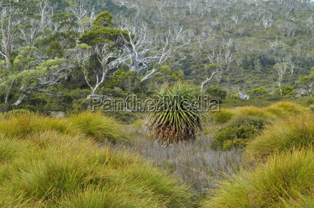 details of the scrub forest at