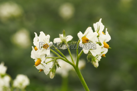 flor lindas flores inflorescencia florescer agricultura