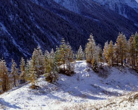 mountains alps clump of trees european