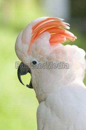 zwierze ptak zwierzeta zwierzatka portret potrait