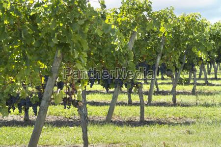 gospodarstwo rolnictwo architektura wino wine lato