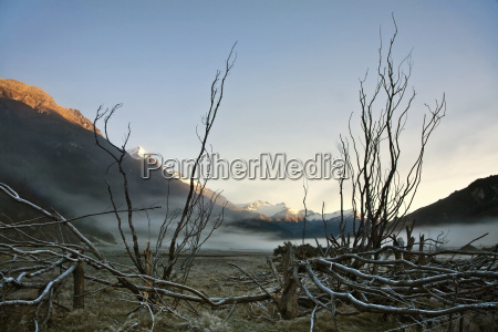 landscape with branches and mountain at