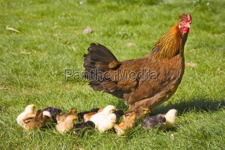 zwierze zwierze domowe ptak fauna zwierzeta