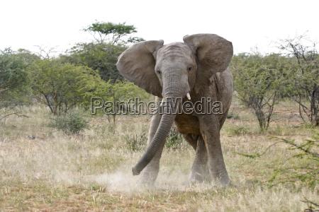 danger park animal mammal fauna wild