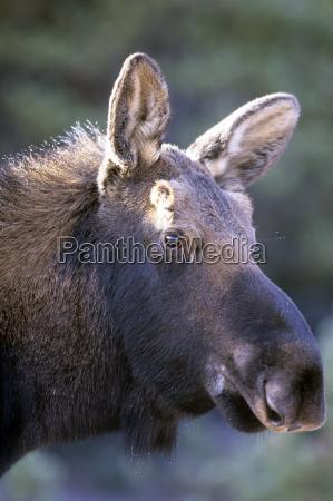 zwierze ssak park narodowy zwierzeta zwierzatka