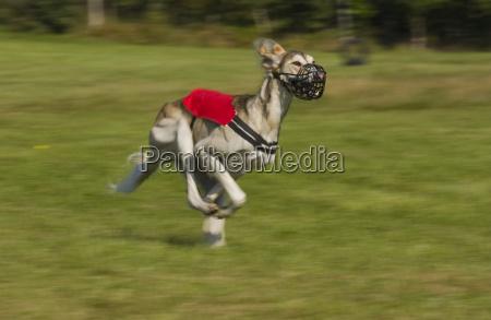 animal mammal fauna animals europe dog