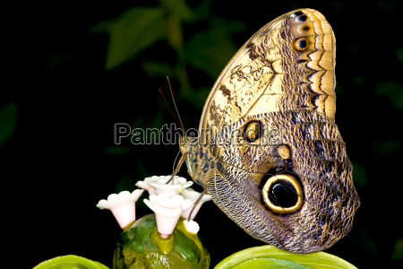animal insect insects fauna butterfly animals