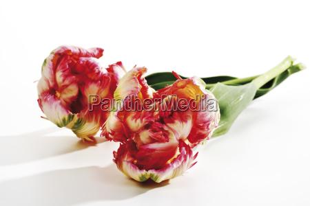 zwolniony opcjonalne kwiat kwiatek zawod roslina