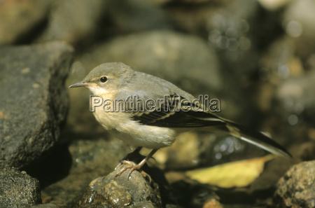 zwierze ptak fauna zwierzeta zwierzatka ptaki