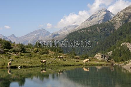 mountains waters alps european caucasian europe