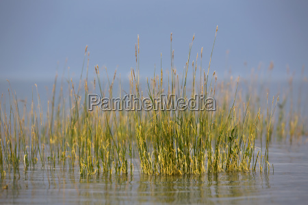 grass on the shore of lake