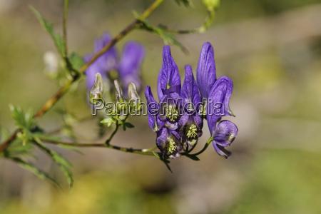 zblizenie drzewa rozkwitac kwitnienie kwiaty bluetenpracht
