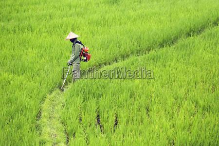 widok z boku rolnika rozpylanie srodkow