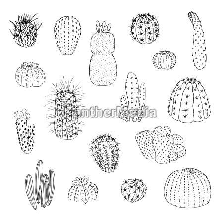 pustynia ilustracja kaktus rysunek fotografia obrazek