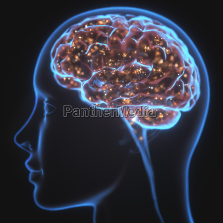 potezny umysl mozgu x ray