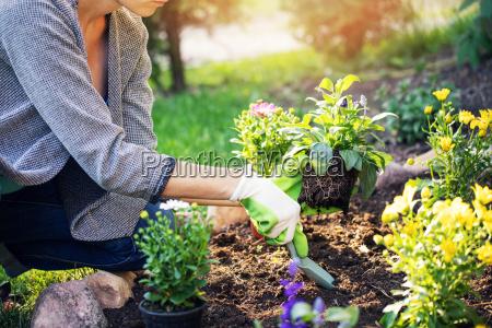 kobieta sadzenia kwiaty lato w domu