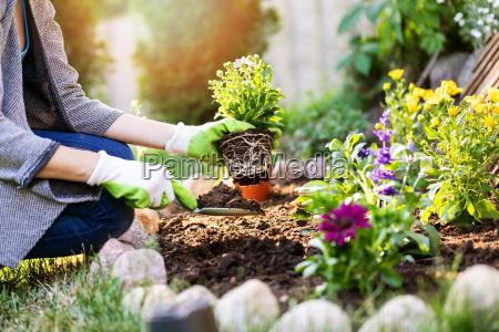 ogrodnik sadzenie kwiatow w ogrodzie lozko