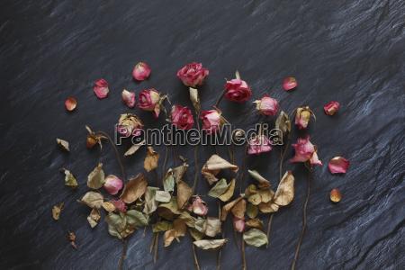 still life lisc kolor emocjonalnie kwiat