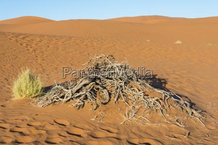 pustynia afryka namibia atrakcje sehenswuerdigkeit atrakcje