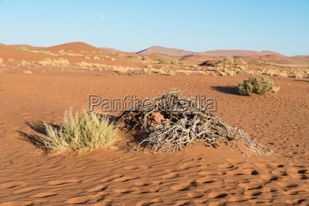 pustynia afryka namibia atrakcje trawy sehenswuerdigkeit