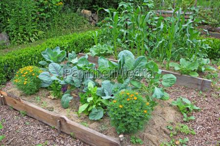 ogrod gospodarczy z roznymi typowymi roslinami