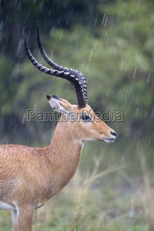 zwierze fauna afryka kenia zwierzeta zwierzatka