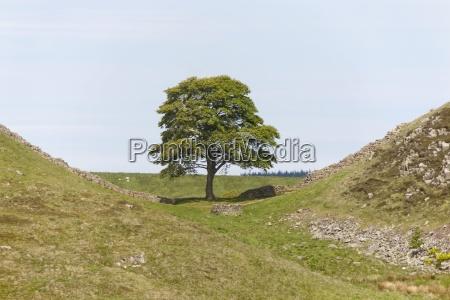 jazda podrozowanie drzewo drzewa gora anhoehe