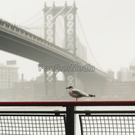 manhattan bridge in the fog new