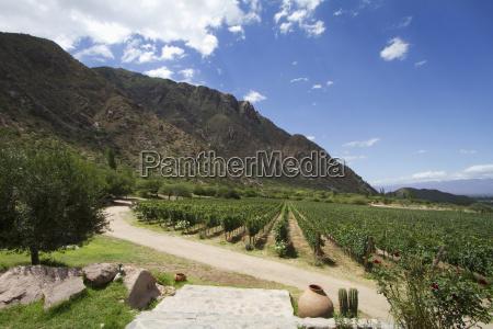 winnica finca las nubes winery cafayate