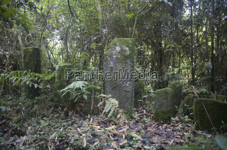 tropikalny las deszczowy park narodowy ranomafana