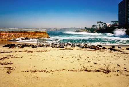 zwierze usa kalifornia wybrzeze pacyfik morskich