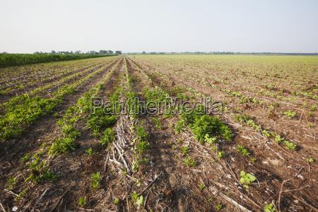 niebieski aplikacja rolnictwo kolor ameykanski grunt