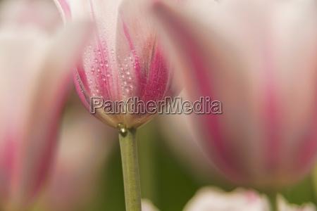 detal kolor ogrod ogrodek ameykanski kwiat
