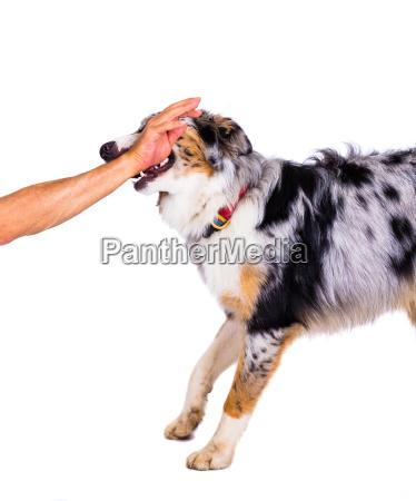 reka zwierze domowe pies zwierzeta gospodarskie