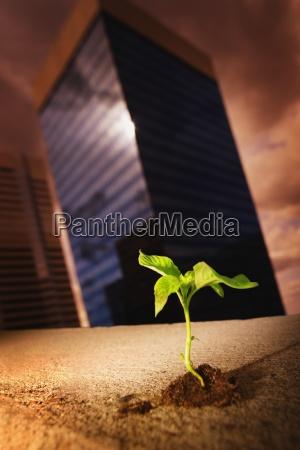 male rosliny rosnace w srodku wysokich