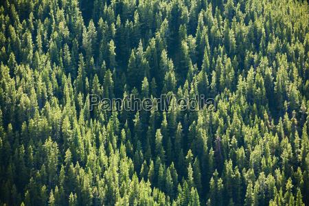 drzewo drzewa gory poziome poziomo kanada
