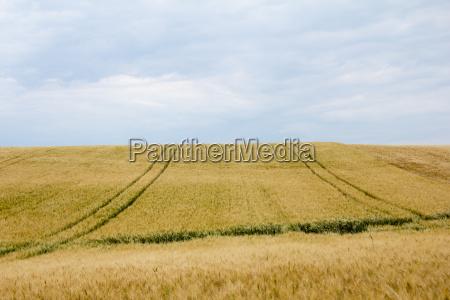 pola kukurydziane z pasami ruchu i