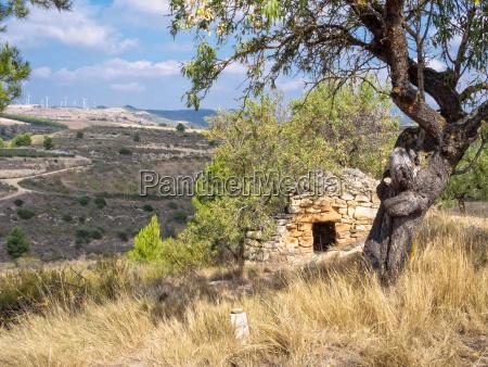 drzewo kamien pestka hiszpania pasterz hirte