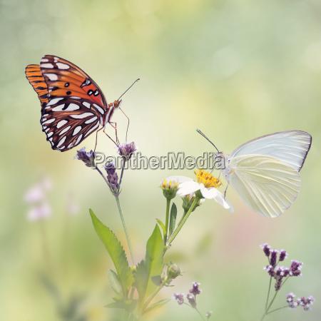 zwierze owad kwiat kwiatek zawod roslina