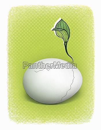 sadzenia rosnace z peknietych jaj